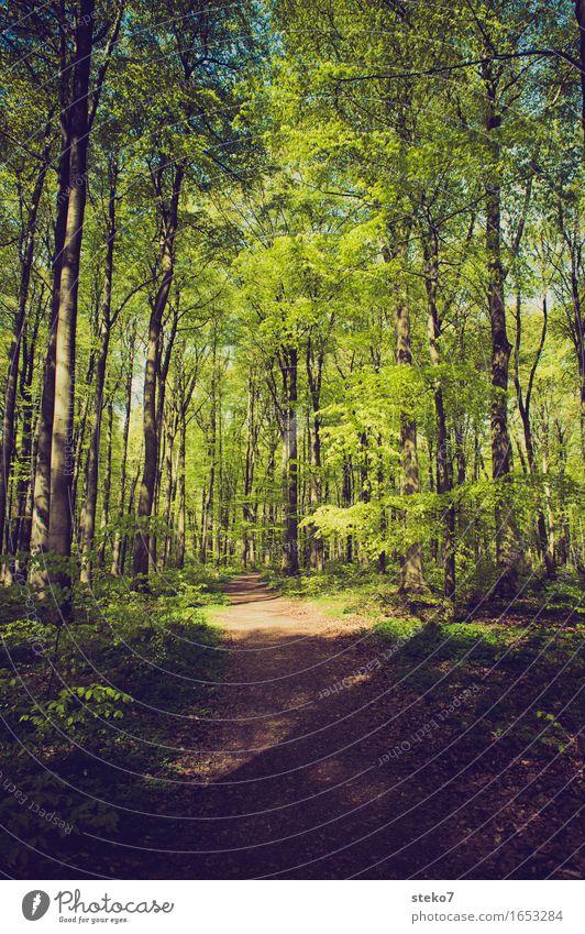 Frühlingswald Schönes Wetter Baum Wald Wege & Pfade Erholung wandern frisch grün Natur Buchenwald Laubwald Fußweg Farbfoto Außenaufnahme Menschenleer