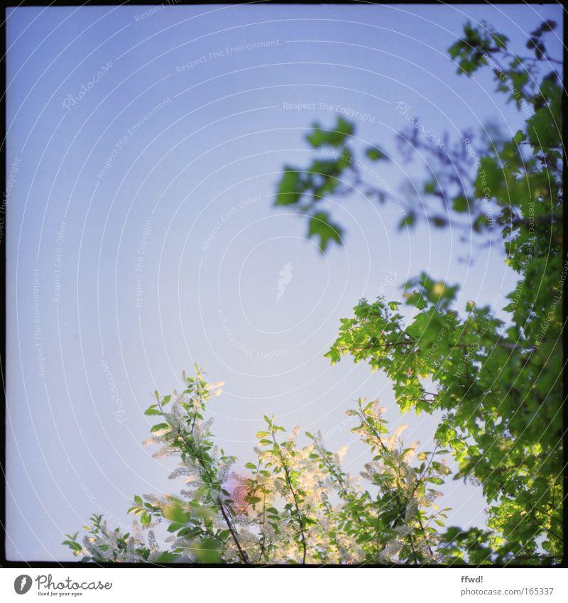Frühlingsfrisch Natur Himmel Baum Pflanze Sommer Blatt Frühling Park Umwelt frisch Wachstum Klima Sauberkeit natürlich analog