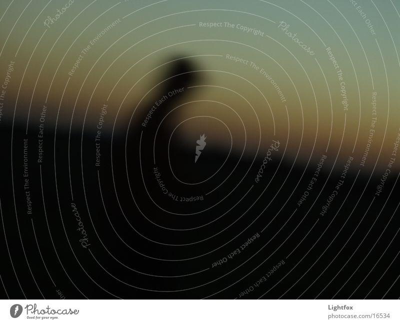 Der unscharfe Jogger Himmel Mann Angst Nebel laufen Momentaufnahme Verlauf Joggen halbdunkel