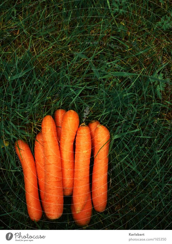 schonkost. Natur Ernährung Gras Garten Gesundheit Lebensmittel Umwelt frisch mehrere liegen Gemüse Ernte Diät Bioprodukte Gartenarbeit Möhre