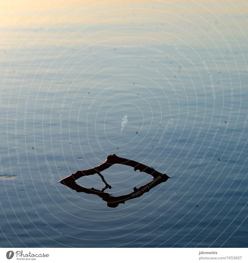 Ast im See Natur Wasser Landschaft ruhig Umwelt Teich