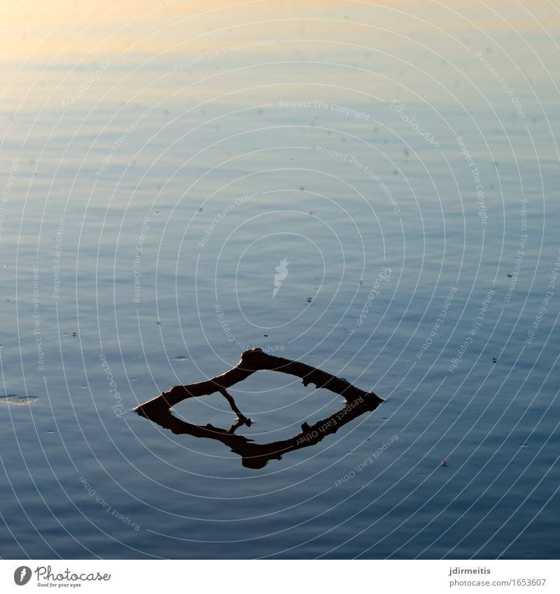 Ast im See Umwelt Natur Landschaft Wasser Sonnenaufgang Sonnenuntergang Teich ruhig Farbfoto Außenaufnahme Zentralperspektive