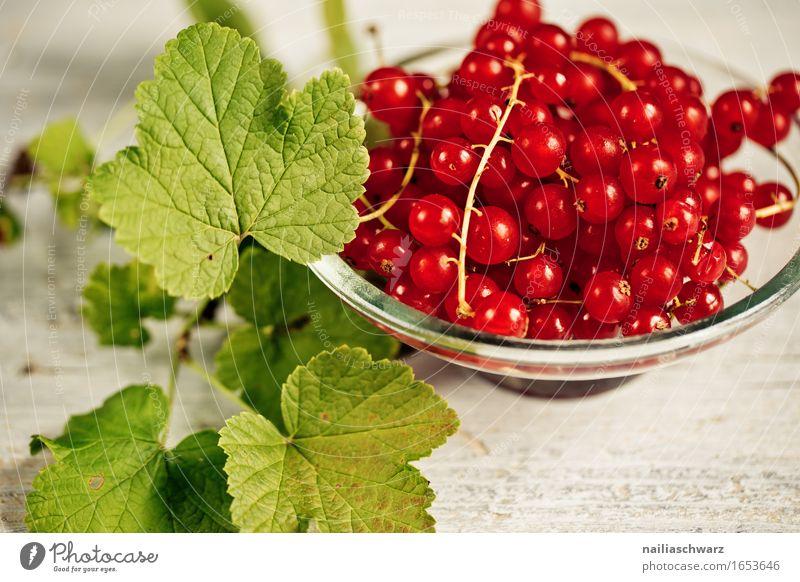 Johannisbeeren Farbe schön grün Gesunde Ernährung rot Blatt Gesundheit natürlich Lebensmittel Frucht süß einfach lecker Bioprodukte Duft