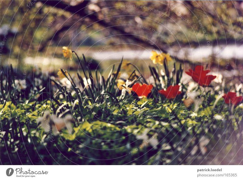 Down in the Park Natur grün Pflanze rot Sommer Blume ruhig gelb Erholung Umwelt Garten Gras Frühling Park natürlich Blühend