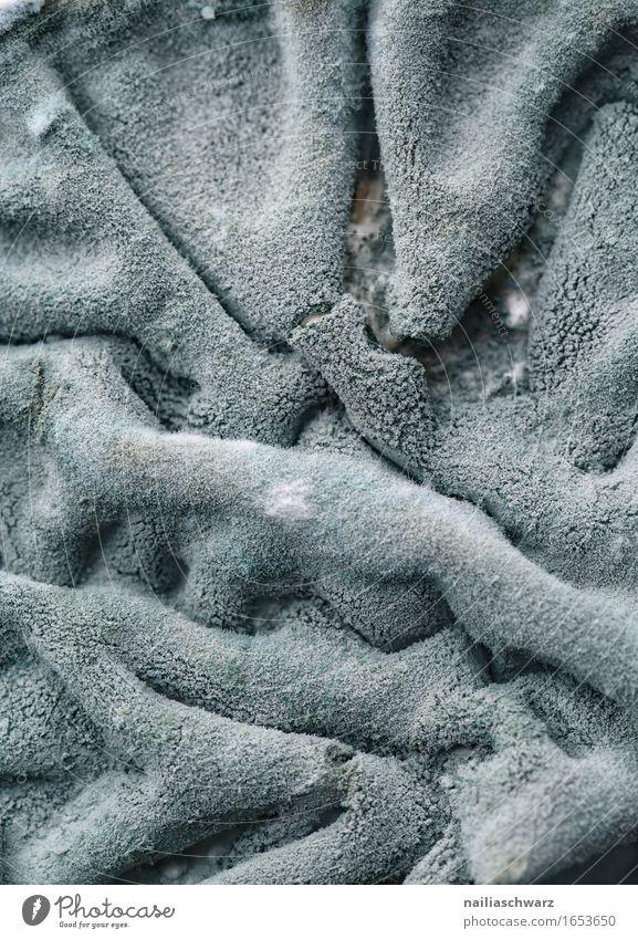 Schimmel auf Frischkaese Lebensmittel Milcherzeugnisse Ernährung Ekel grau Schimmelpilze Frischkäse Kühlschrank unhygienisch dreckig Farbfoto Gedeckte Farben