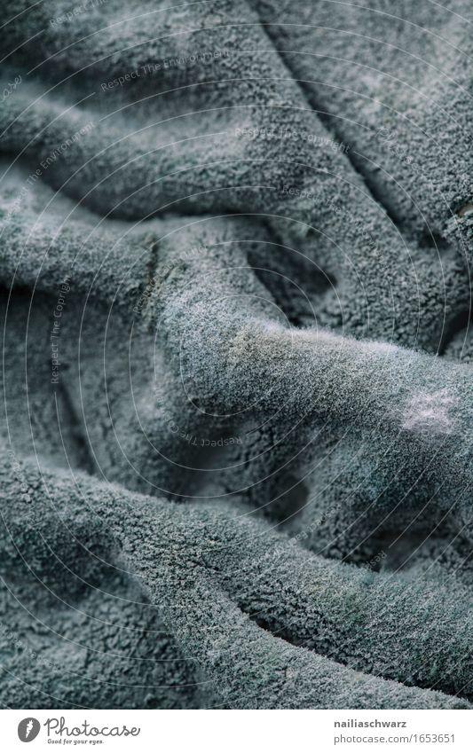 Schimmel auf Frischkaese Lebensmittel Milcherzeugnisse Ernährung Ekel Schimmelpilze Sauberkeit ungesund Farbfoto Gedeckte Farben Innenaufnahme Nahaufnahme