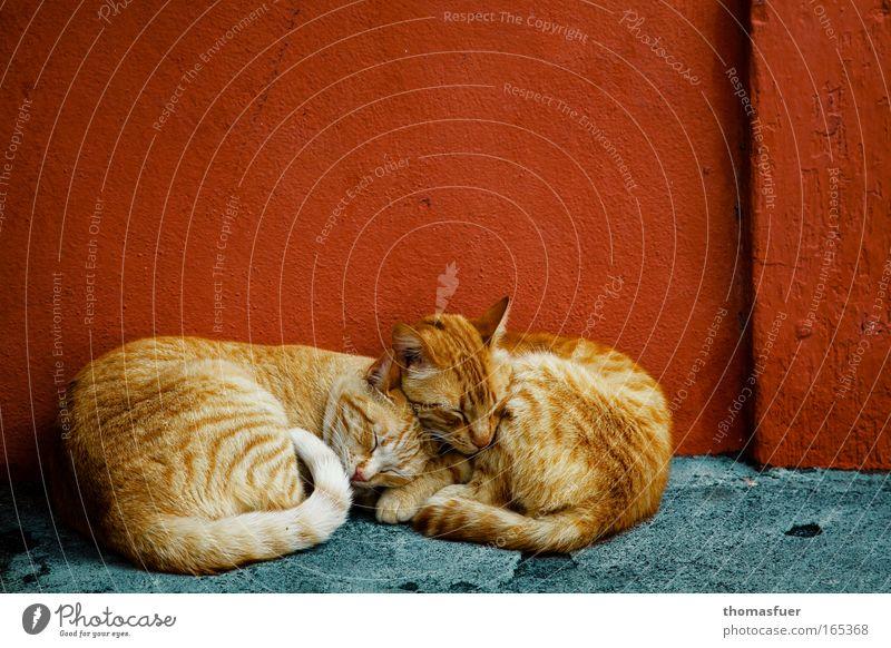 Wärme Katze blau rot Tier Erholung klein Freundschaft Tierjunges Zusammensein Zufriedenheit Tierpaar natürlich schlafen paarweise niedlich Fell