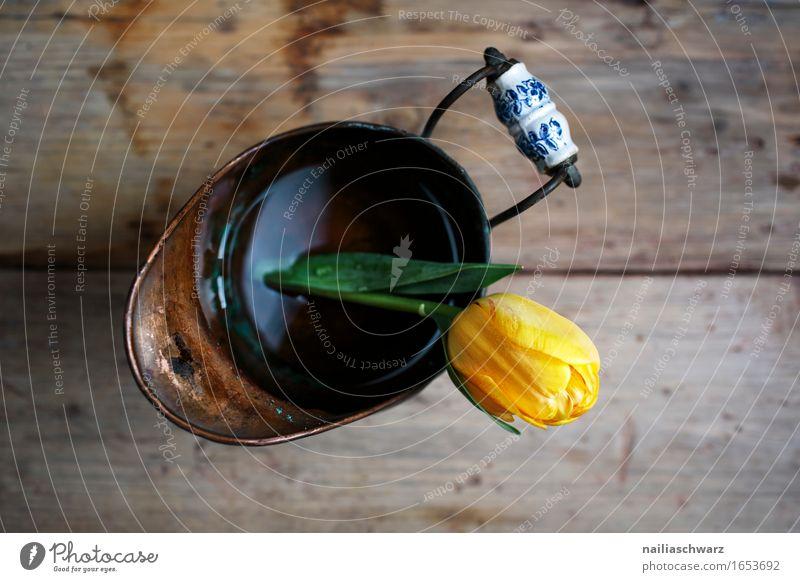 Gelbe Tulpe Stil Pflanze ästhetisch retro gelb Stillleben Single Blume Blüte Tulpenblüte Kannen 1 Farbfoto Gedeckte Farben Studioaufnahme Nahaufnahme