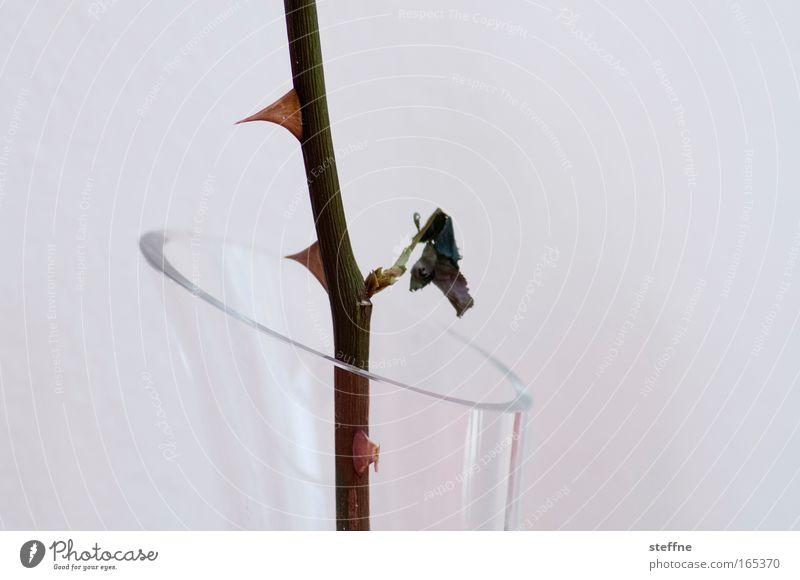 Dornröschen schön Glas Rose Dekoration & Verzierung Schutz Blumenstrauß Vase Stachel Dorn Blume Dornröschen