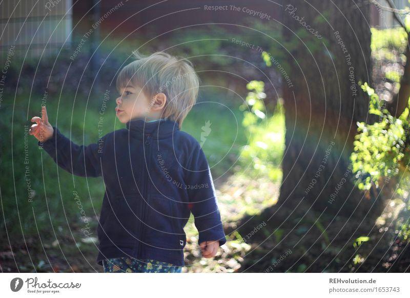 Achtung Mensch maskulin Kind Kleinkind Junge 1 1-3 Jahre Umwelt Natur Sonne Sommer Baum Garten Park Wiese beobachten Spielen klein natürlich niedlich Freude