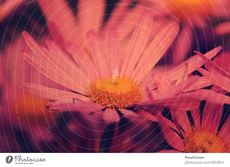 Blüte elegant schön Körperpflege Kosmetik Parfum Wellness Leben harmonisch Landwirtschaft Forstwirtschaft Kunst Natur Landschaft Pflanze Blume Blatt Garten