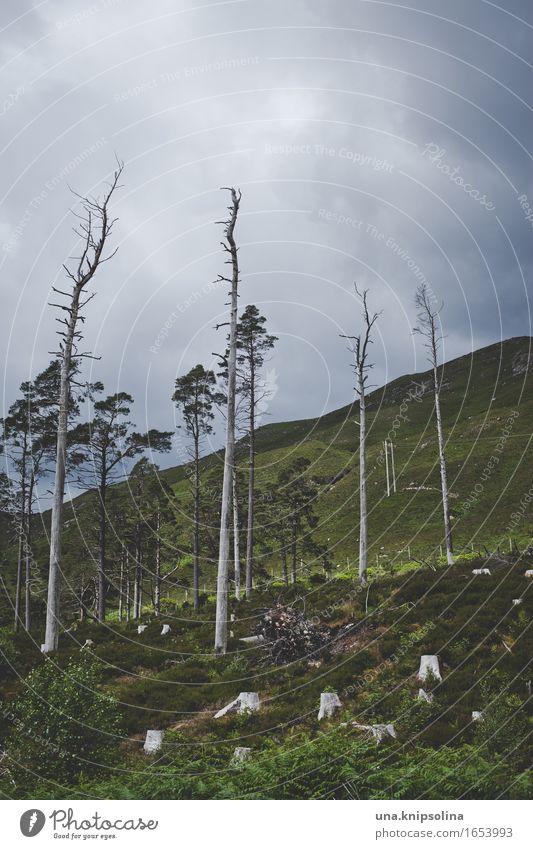 Baumhang Umwelt Natur Landschaft Wolken schlechtes Wetter Wald Schottland dunkel Einsamkeit rau karg trist Farbfoto Gedeckte Farben Außenaufnahme Menschenleer