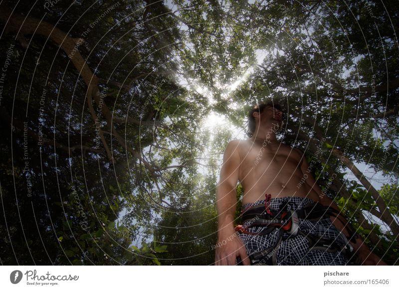 sammel dich und dann rauf ins licht! Klettern Bergsteigen maskulin Mann Erwachsene Körper 1 Mensch 30-45 Jahre Natur Schönes Wetter Baum Wald klettergurt