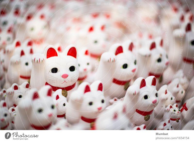 Maneki Neko Katze Ferien & Urlaub & Reisen weiß rot Glück Angst Fröhlichkeit Tiergruppe niedlich geheimnisvoll Kitsch gruselig Sammlung bizarr Nostalgie Japan