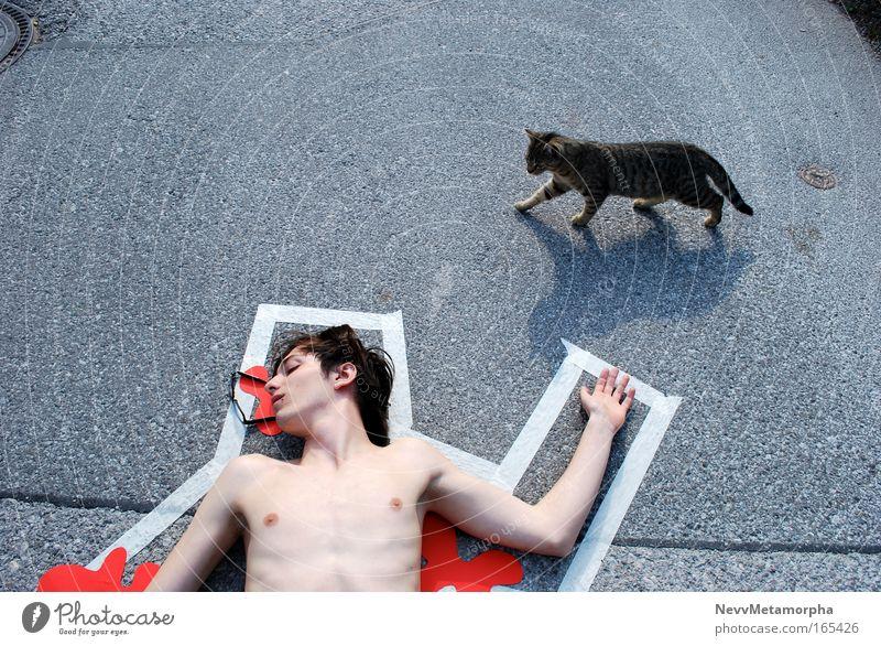 kitten as murderer Jugendliche Freude Straße nackt Haare & Frisuren träumen Katze Zufriedenheit Haut maskulin Brille Mann Junger Mann Mensch