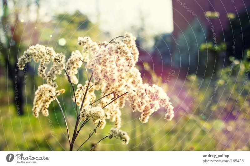 Natur schön Baum Blume grün Pflanze Sommer gelb Blüte Frühling