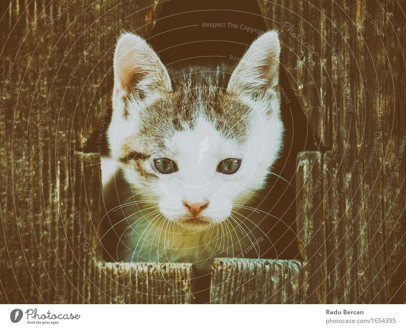 Kleines Baby Kitty Cat Portrait Umwelt Natur Tier Haustier Wildtier Katze Tiergesicht 1 Tierjunges beobachten entdecken Blick Freundlichkeit Fröhlichkeit