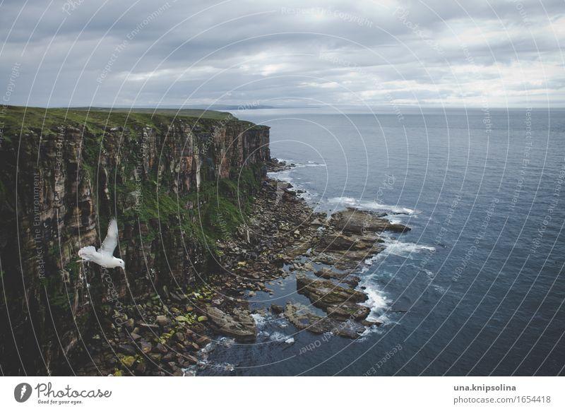photobombing Ferien & Urlaub & Reisen Ausflug Ferne Umwelt Natur Landschaft Urelemente Erde Wasser Wolken Küste Meer Atlantik Duncansby Schottland Vogel 1 Tier