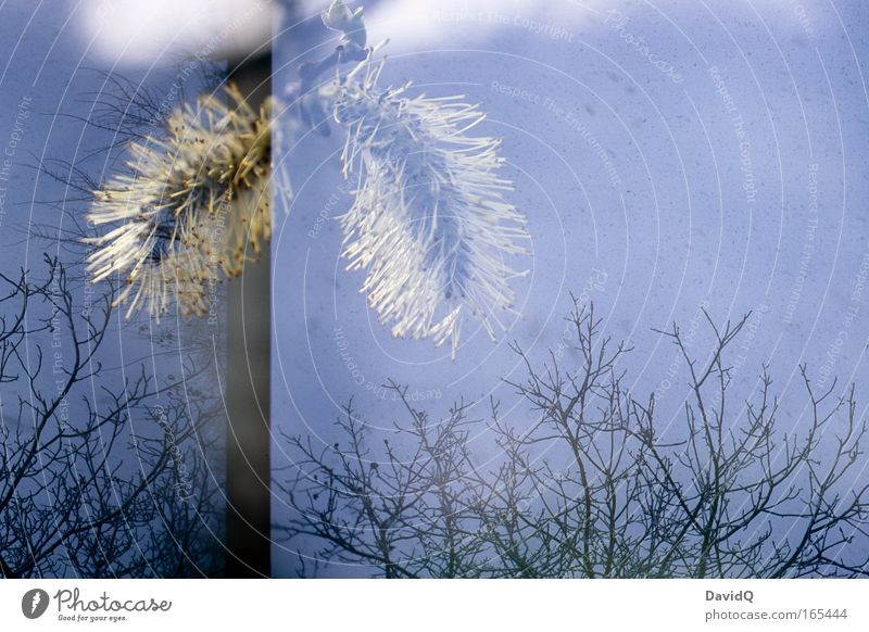 doppeldecker Himmel Natur Baum Pflanze Umwelt Blüte frisch Duft Doppelbelichtung
