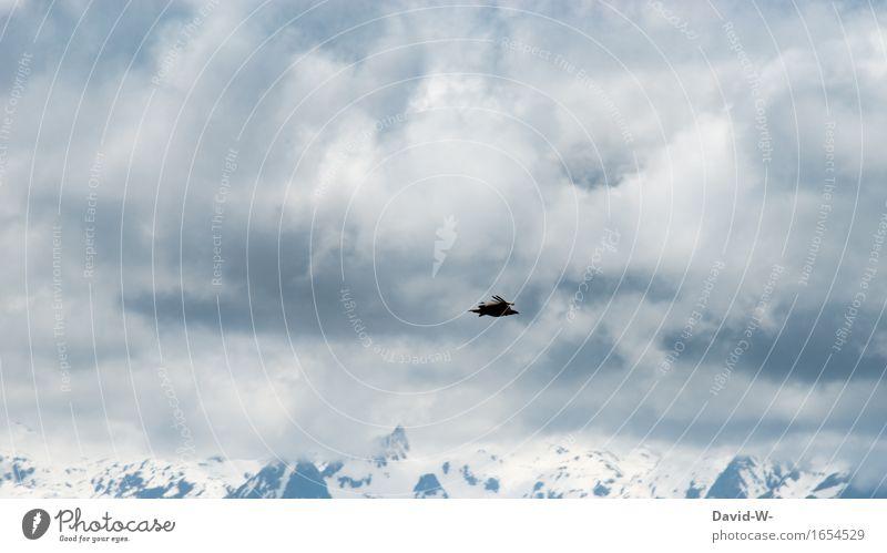 Gipfelstürmer Natur Ferien & Urlaub & Reisen Landschaft Wolken Ferne Winter Berge u. Gebirge Umwelt Schnee Freiheit fliegen Vogel Tourismus Wetter wandern Wind
