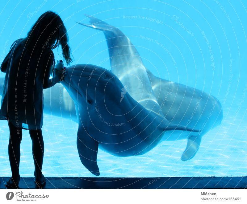 Spiel mit! Unterwasseraufnahme Silhouette Tierporträt Freude Spielen Kind Mädchen Kindheit 1 Mensch 3-8 Jahre Zoo Urelemente Wasser Aquarium 2 Tierpaar
