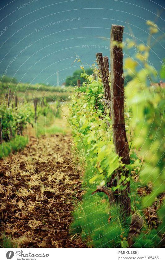 Weinanbau blau grün Sommer Berge u. Gebirge braun Feld natürlich analog Jahrmarkt