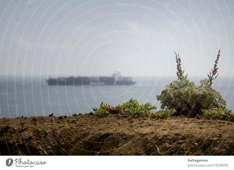 Pflanze und ein Schiff Wolkenloser Himmel Horizont Frühling Meer Verkehr Schifffahrt Containerschiff Krise Kultur Farbfoto Menschenleer Textfreiraum links