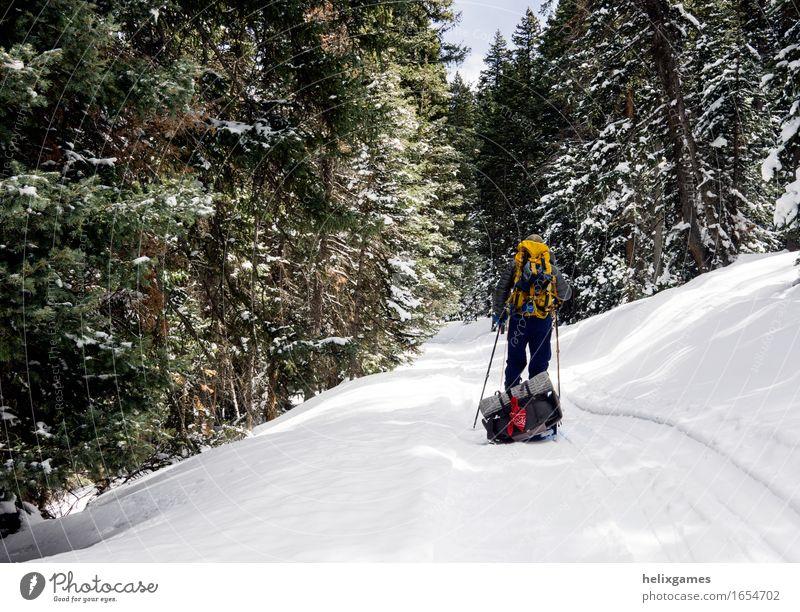 Ein Ski im Wald Leben Freizeit & Hobby Skifahren wandern Sport Fitness Sport-Training Sportler maskulin Körper 1 Mensch Abenteuer La Sal Mountains Utah Moab