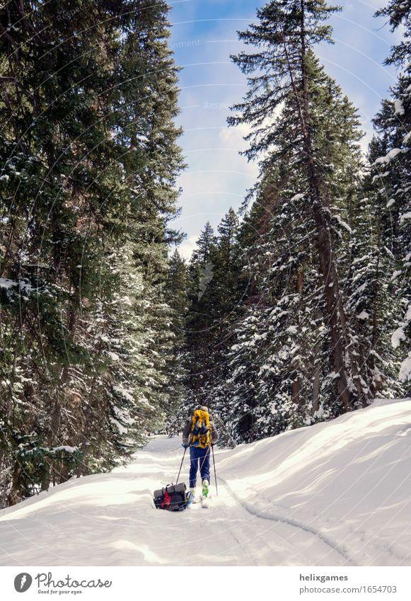 Winterpfad wandern Skifahren Mann Erwachsene 1 Mensch 18-30 Jahre Jugendliche Natur Himmel Baum Berge u. Gebirge laufen La Sal Mountains Utah Moab Schlitten
