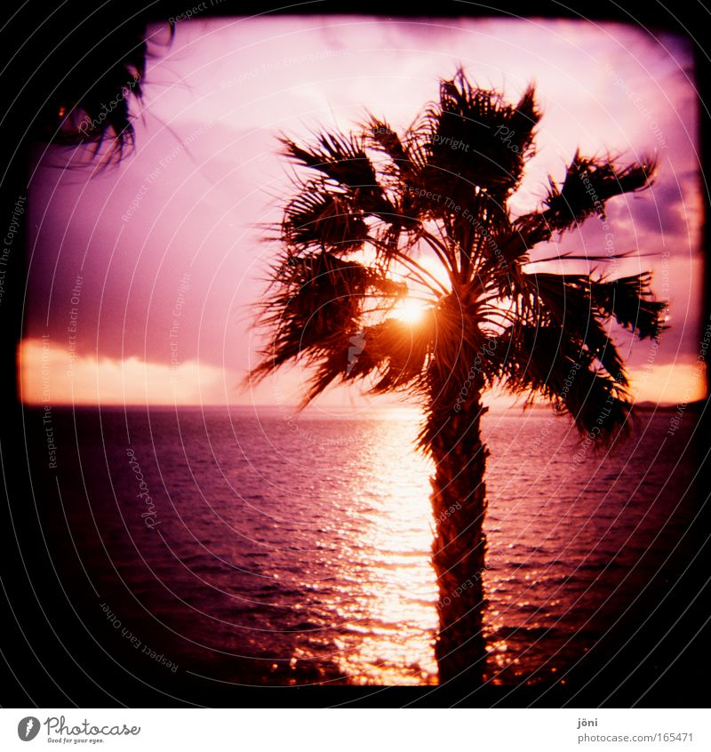 Palmenschein Farbfoto Außenaufnahme Lomografie Holga Dämmerung Sonnenstrahlen Sonnenaufgang Sonnenuntergang Himmel Horizont Schönes Wetter exotisch Strand