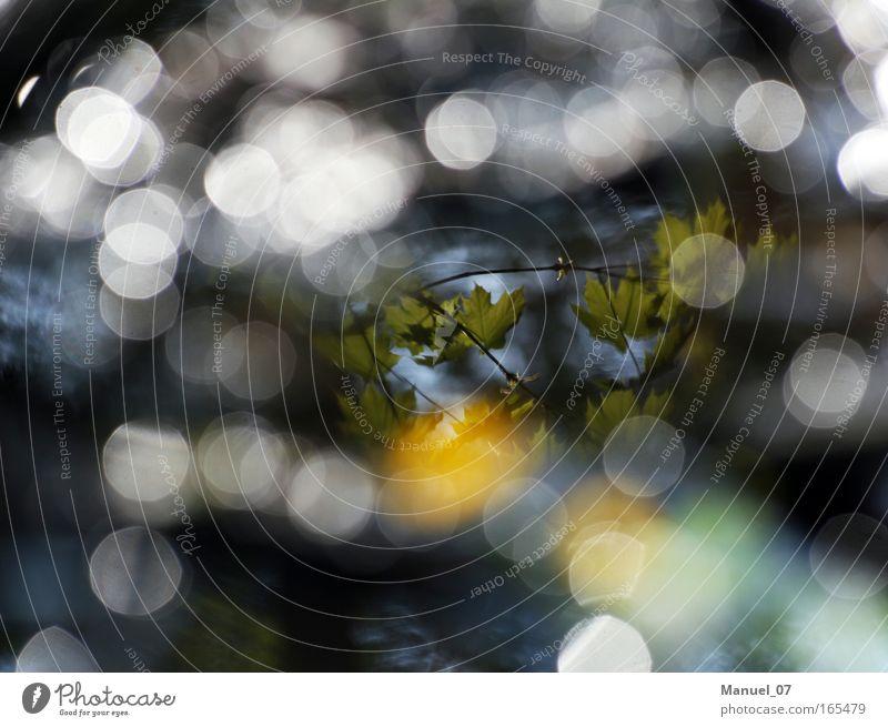 FRÜHLINGSGLANZ Farbfoto Außenaufnahme Experiment Menschenleer Tag Schatten Kontrast Reflexion & Spiegelung Lichterscheinung Sonnenlicht Sonnenstrahlen Unschärfe