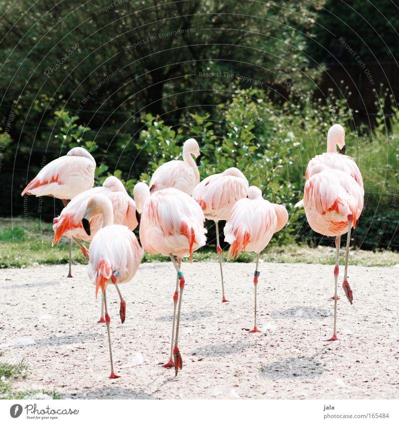break away schön Pflanze Tier Vogel rosa laufen Tiergruppe Sträucher Hinterteil Flügel Zoo Flamingo