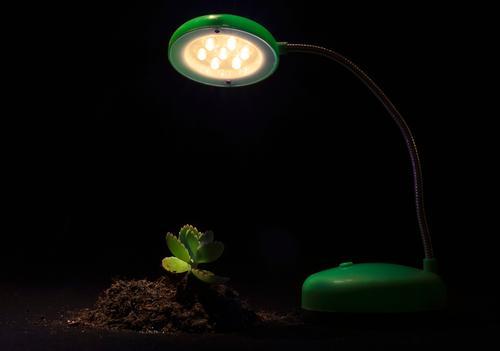 Junge Sprössling- und Tischlampe auf einem schwarzen Hintergrund Natur Pflanze grün Baum Blume Blatt Umwelt Lampe Wachstum Erde Technik & Technologie Energie