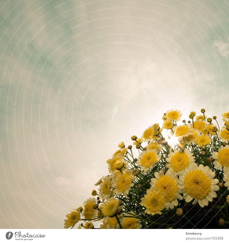 sunny Himmel Natur schön Pflanze Sonne Blume Wolken gelb Blüte hell natürlich ästhetisch Blühend Duft harmonisch Bildausschnitt