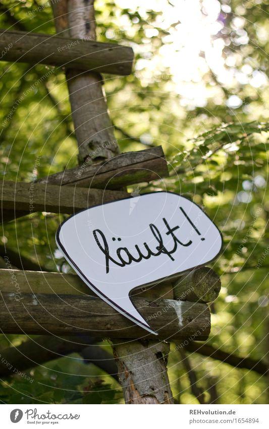 700   läuft Natur Landschaft Freude Wald Umwelt Holz Glück außergewöhnlich Business Schriftzeichen Schilder & Markierungen Kommunizieren Erfolg laufen