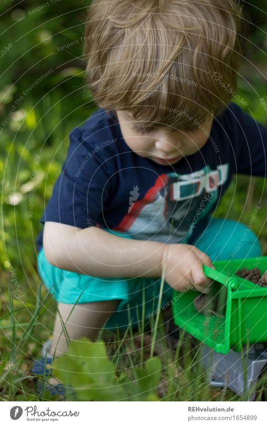 Ladung Tannenzapfen Mensch Kind Kleinkind Junge 1 1-3 Jahre Umwelt Natur Wiese Feld Wald hocken Spielen klein natürlich niedlich grün Freude Glück Zufriedenheit