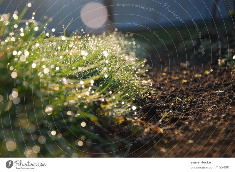 Rasenkante Außenaufnahme Nahaufnahme Menschenleer Textfreiraum rechts Morgen Morgendämmerung Reflexion & Spiegelung Sonnenlicht Sonnenstrahlen Sonnenaufgang