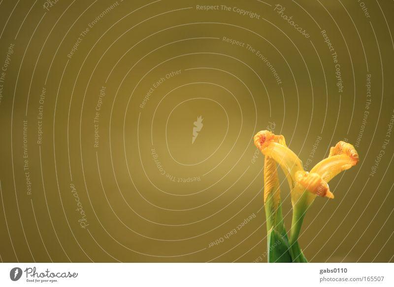 iY Natur schön Blume grün Pflanze gelb Gefühle Blüte Frühling Park Zufriedenheit Stimmung braun Umwelt ästhetisch Wachstum