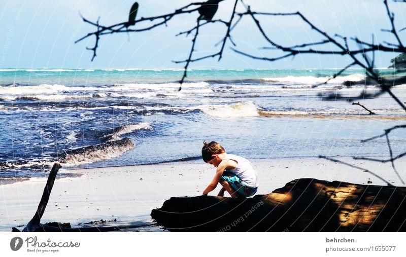 wenn träume fliegen lernen Natur Landschaft Strand Küste Spielen Wellen