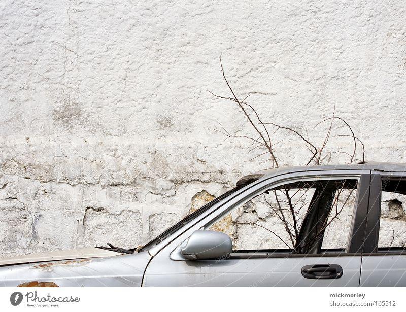 Technik Vs. Nature Farbfoto Außenaufnahme Menschenleer Tag Totale Blick nach vorn Baum Straße Fahrzeug PKW beobachten ästhetisch dreckig kalt kaputt Neugier