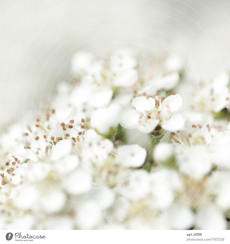 white lies Farbfoto Außenaufnahme Nahaufnahme Detailaufnahme Makroaufnahme Textfreiraum oben Tag Licht Schwache Tiefenschärfe Zentralperspektive Natur Pflanze