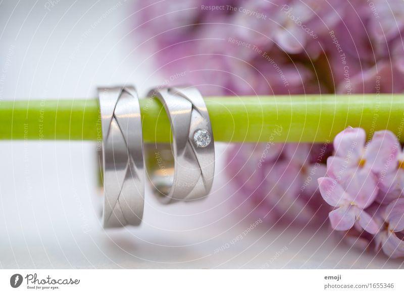 Ringe Hochzeit Accessoire Schmuck Ehering Zeichen Zukunft Zusammenhalt Farbfoto Innenaufnahme Nahaufnahme Makroaufnahme Menschenleer Tag