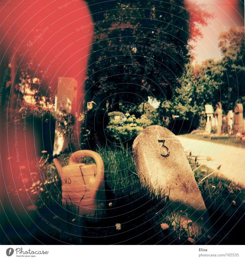 3 Blume Gras Garten träumen Stein Wege & Pfade Park hell 3 Ziffern & Zahlen außergewöhnlich Blut Fleck Lomografie Friedhof Gießkanne