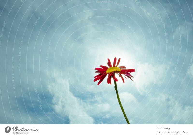 sunblocker Natur schön Himmel Sonne Blume blau Pflanze rot Sommer Wolken Leben Gefühle Stil Blüte Frühling Glück