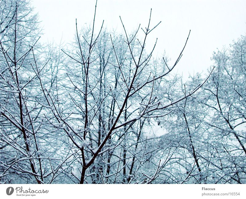 Winteräste Baum Ast Schnee Baumkrone Strukturen & Formen Fraktale
