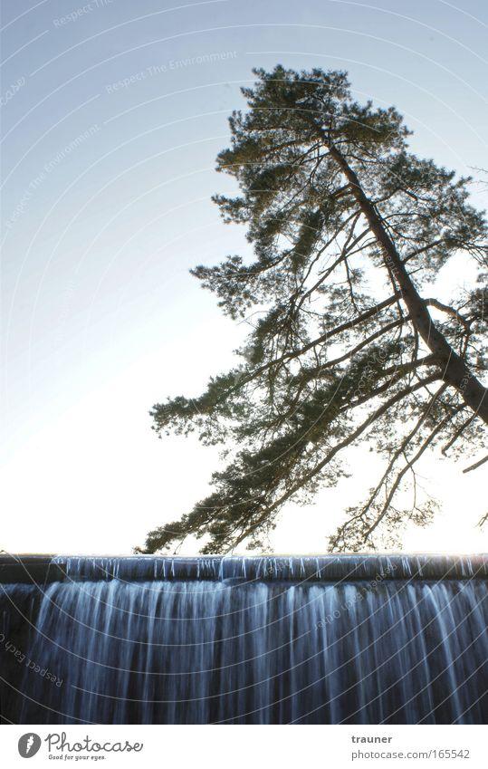 Himmelswasser Natur Wasser Himmel Baum Sonne Erholung Freiheit Zufriedenheit elegant Umwelt Wassertropfen Ausflug ästhetisch Lebensfreude Unendlichkeit