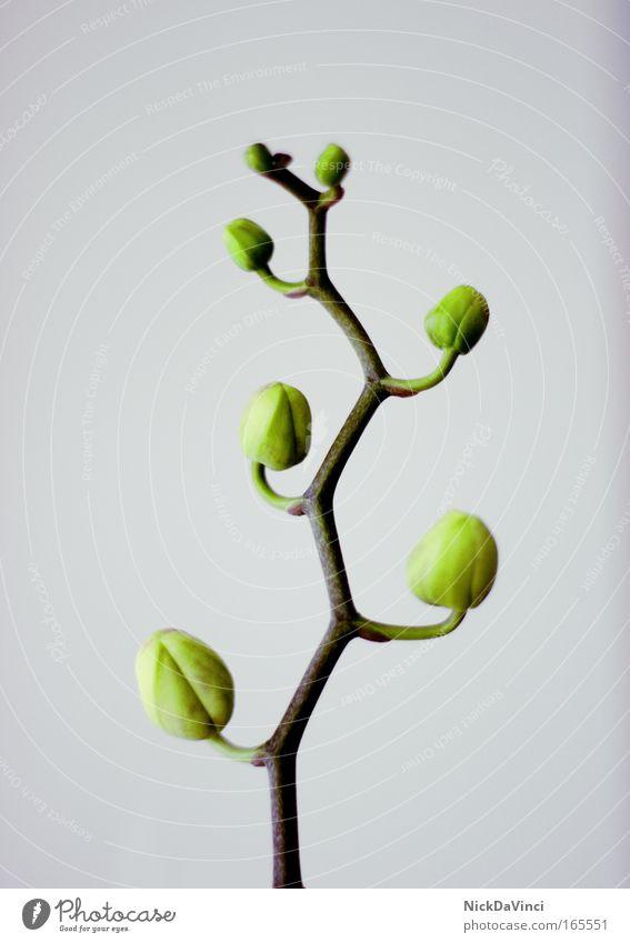 Baum des Wachstums Natur grün Pflanze Tier Leben Blüte Frühling grau Zufriedenheit Kraft Umwelt Erfolg Blume frisch