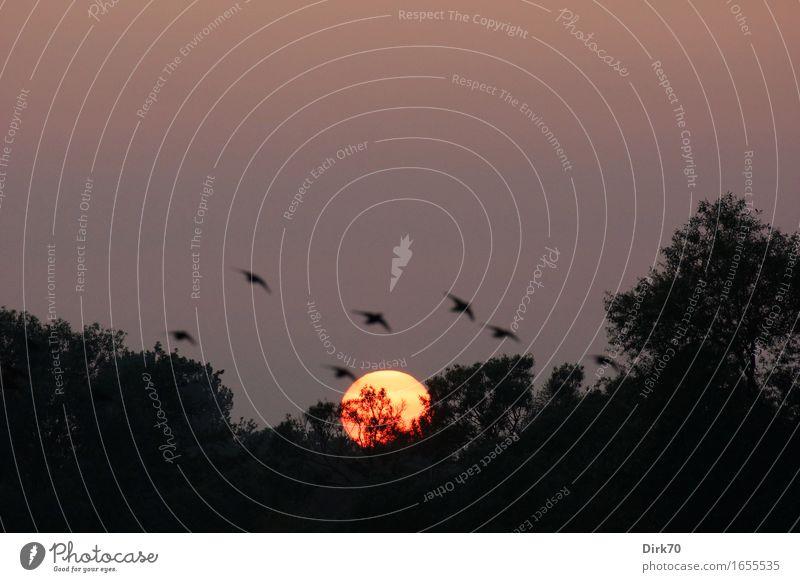 Abendvögel Himmel Natur Sommer Sonne Baum Landschaft ruhig Tier Ferne Wald Frühling Zeit Vogel Park Idylle Wildtier