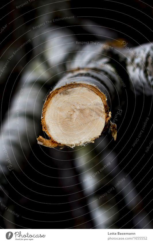 Birke Landwirtschaft Forstwirtschaft Handwerk Umwelt Natur Baum Baumstamm Ast Wald Holz Arbeit & Erwerbstätigkeit natürlich rund wild braun gelb schwarz