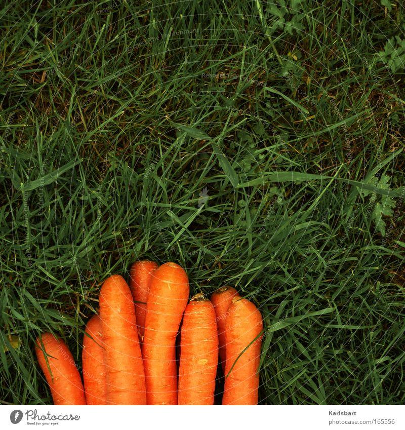möhrchendising. Lebensmittel Möhre Ernährung Bioprodukte schön Gesundheit Gartenarbeit Umwelt Gras Wiese natürlich Diät orange Farbfoto mehrfarbig Außenaufnahme